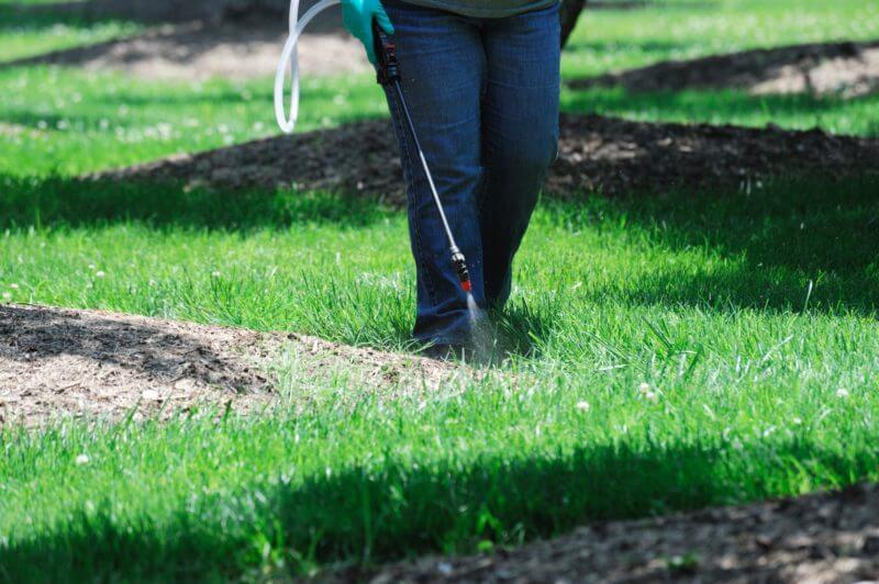 spraying pesticide in the lawn